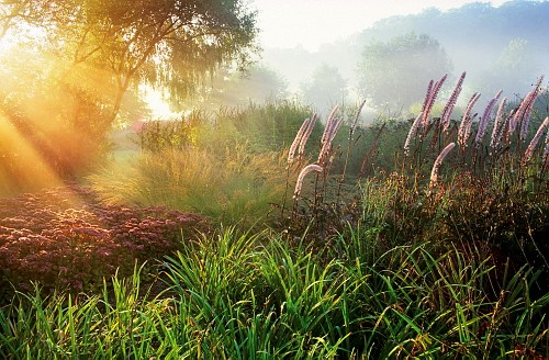 International Garden Photographer of the Year - Marianne Majerus 
