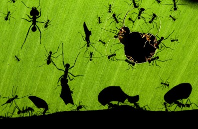 Wildlife Photographer of the Year winner Bence Mate